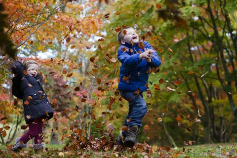 Children enjoying autumn leaves at Bodnant Gardens